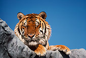 TGR 01 RK0560 19