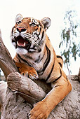 TGR 01 RK0569 02