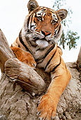 TGR 01 RK0569 04