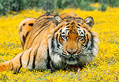 TGR 01 RK0579 24