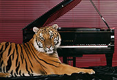 TGR 01 RK0594 08