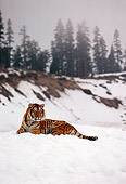TGR 01 RK0645 19