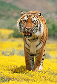 TGR 01 RK0655 31