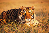 TGR 01 RK0695 34