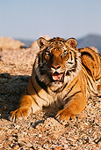 TGR 01 RK0768 01