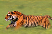 TGR 01 TL0001 01