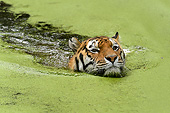 TGR 02 AC0004 01