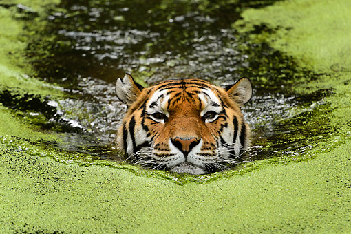 TGR 02 AC0006 01