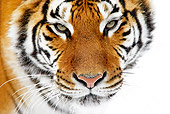 TGR 02 GL0002 01