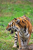 TGR 02 GL0004 01