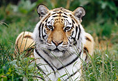 TGR 02 GR0001 01