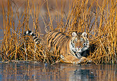 TGR 02 KH0015 01