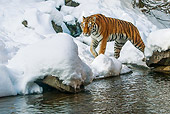TGR 02 KH0017 01
