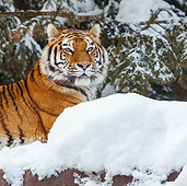 TGR 02 KH0019 01
