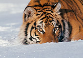 TGR 02 LS0009 01