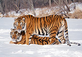 TGR 02 LS0011 01
