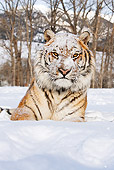 TGR 02 MC0001 01