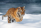 TGR 02 MC0002 01