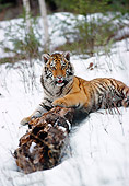 TGR 02 MC0003 01