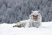 TGR 02 MC0004 01