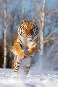 TGR 02 KH0003 01