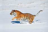 TGR 02 KH0005 01