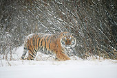 TGR 02 KH0006 01
