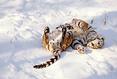 TGR 02 LS0002 01
