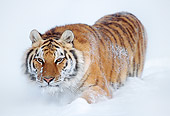 TGR 02 LS0006 01
