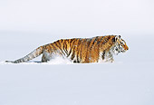 TGR 02 LS0007 01
