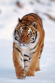 TGR 02 RF0001 01