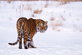TGR 02 RF0002 01