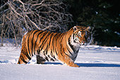 TGR 02 RF0004 01