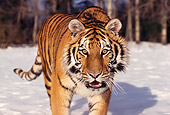 TGR 02 RK0029 01