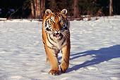 TGR 02 RK0032 03
