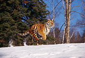 TGR 02 RK0046 04