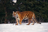 TGR 02 RK0049 09