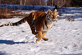 TGR 02 RK0051 01