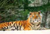 TGR 02 RW0001 01