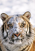 TGR 02 TK0001 01