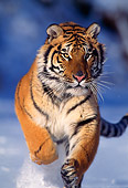 TGR 02 TL0001 01
