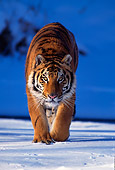 TGR 02 TL0007 01