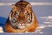 TGR 02 TL0008 01