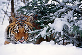 TGR 02 TL0010 01