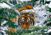 TGR 02 TL0012 01