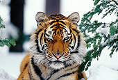 TGR 02 TL0014 01