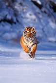 TGR 02 TL0015 01