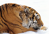 TGR 02 TL0016 01