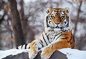TGR 02 TL0017 01