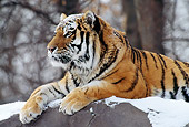 TGR 02 TL0018 01